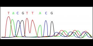 alphabet in our genes