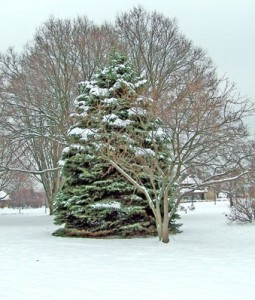 winter-trees-in-snow
