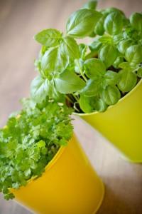 gardening with children herbs in pots