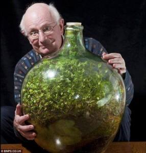 spiderwort-terrarium