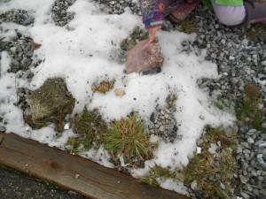 winter learning activities for kindergarten readiness