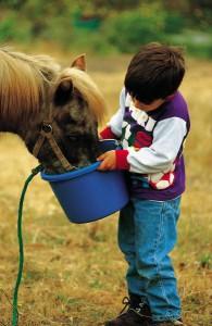 magic of childhood pets