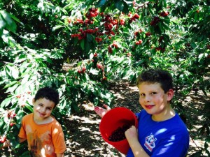 fun and learning cherry-picking