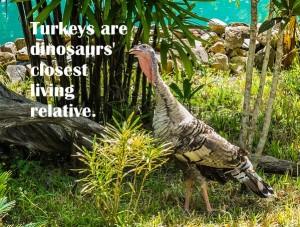 turkey-dino-382609_640-pbay