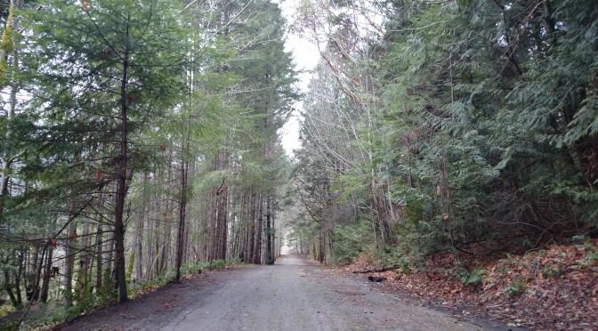 Forset Trail, by: Adam McFadyen