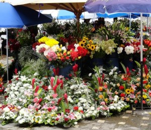 nature at the flower market