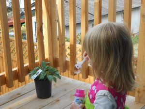 chasing bubbles nature time